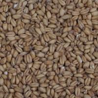 Солод Wheat Malt 6 кг.